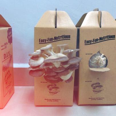 mushroom-grow-kit